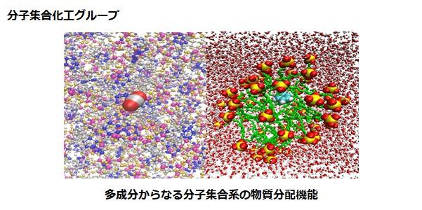 分子集合化工グループ:多成分からなる分子集合系の物質分配機能