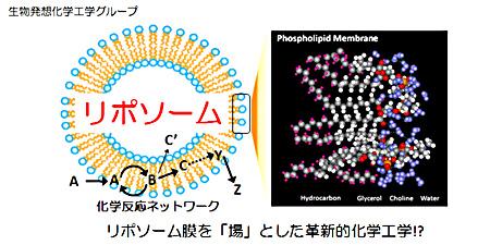 生物発想化学工学グループ:リポソーム膜を「場」とした革新的化学工学!?