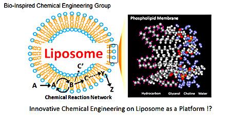 Bio-Inspired Chemical Engineering Group